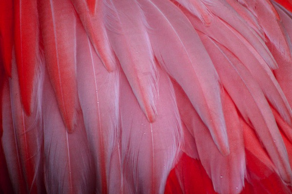 pink-flamingo-feathers-tony-and-kristi-middleton
